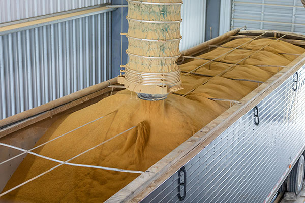WNY Energy production of dry distillers grain