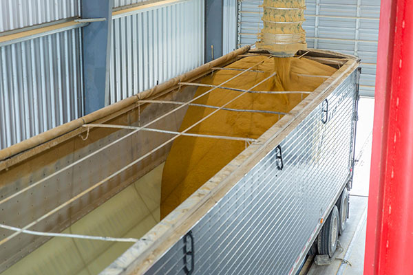 Distillers Grains corn product loaded into the top of an open truck
